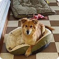 Adopt A Pet :: Omega - Nashville, TN