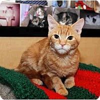 Adopt A Pet :: Jackson - Farmingdale, NY