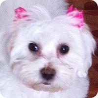 Adopt A Pet :: Chloe - La Costa, CA