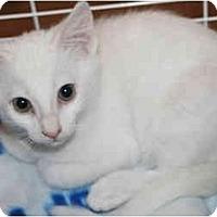 Adopt A Pet :: Giorgio - Modesto, CA