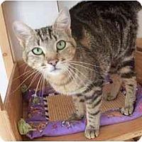 Adopt A Pet :: Dutchess - El Cajon, CA