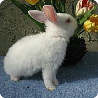 Adopt A Pet :: Honey Crisp - Bonita, CA