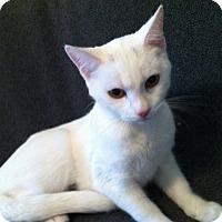 Adopt A Pet :: Truffles - Tracy, CA
