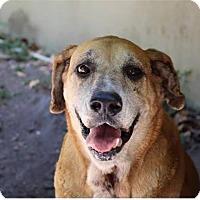 Adopt A Pet :: LILLY - Lighthouse Point, FL