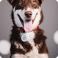 Adopt A Pet :: Tundra - Portland, OR