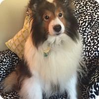 Adopt A Pet :: Jazz - Mission, KS