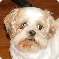 Adopt A Pet :: Skylar - MINNEAPOLIS, KS