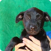 Adopt A Pet :: Ravel - Oviedo, FL