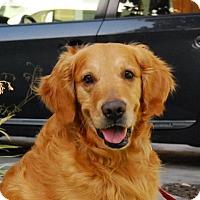 Adopt A Pet :: True Blue - Los Angeles, CA