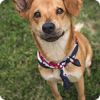 Adopt A Pet :: Sassy - Houston, TX