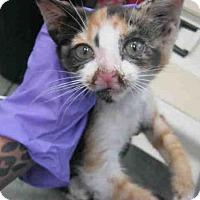 Adopt A Pet :: A385016 - San Antonio, TX