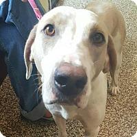Adopt A Pet :: Jolene - Doylestown, PA