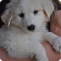 Adopt A Pet :: Loki - Atlanta, GA