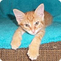 Adopt A Pet :: Kalan - Colorado Springs, CO