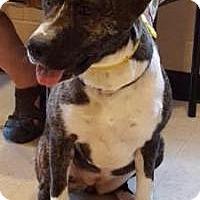 Adopt A Pet :: Izzie - Lebanon, ME