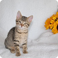 Adopt A Pet :: Lilac (in CT) - Manchester, CT