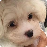Adopt A Pet :: MUI MUI - Toronto, ON