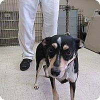 Adopt A Pet :: Feist - Laingsburg, MI