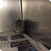 Adopt A Pet :: Carbonara - Janesville, WI