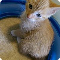 Adopt A Pet :: Orion - Newport, KY