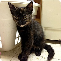 Adopt A Pet :: Abigail - River Edge, NJ