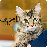 Adopt A Pet :: Nugget - Somerset, PA