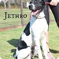 Adopt A Pet :: Jethro - Willingboro, NJ