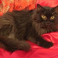 Adopt A Pet :: Evangeline - St. Louis, MO