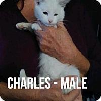 Adopt A Pet :: CHARLES - Glendale, AZ