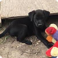 Adopt A Pet :: Kenny - Aurora, CO