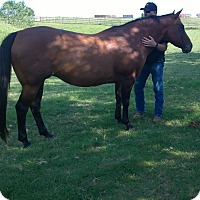 Quarterhorse Mix for adoption in Guthrie, Oklahoma - Meggie