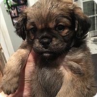 Adopt A Pet :: Plum - San Diego, CA