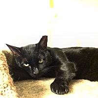 Adopt A Pet :: Jasper - Queens, NY