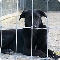 Adopt A Pet :: Summer - Mexia, TX