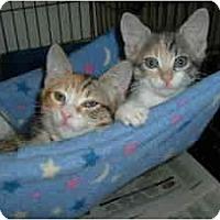 Adopt A Pet :: Cheerio - Island Park, NY
