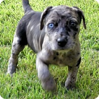 Adopt A Pet :: Leon - Homewood, AL