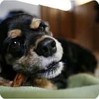 Adopt A Pet :: WINSTON - Tacoma, WA