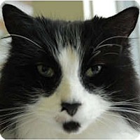 Adopt A Pet :: Nicolas - Lunenburg, MA