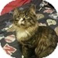 Adopt A Pet :: Reggie - Vancouver, BC