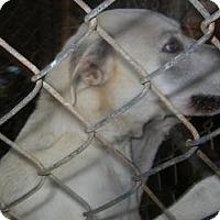 Adopt A Pet :: Jackson - dawson, GA