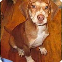 Adopt A Pet :: Eliza - Afton, TN