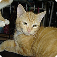 Adopt A Pet :: Pop - Grayslake, IL