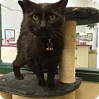 Adopt A Pet :: zz 'Merlin' courtesy post - Cincinnati, OH