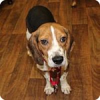 Adopt A Pet :: Ginko - Dumfries, VA