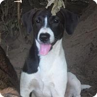 Adopt A Pet :: Paisley adoption pending - Manchester, CT
