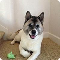 Adopt A Pet :: Kiku - Hayward, CA