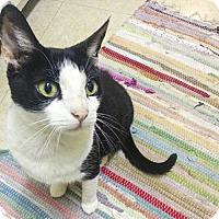 Adopt A Pet :: Rue - Oakland, CA