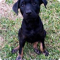 Adopt A Pet :: Raisinet - West Hartford, CT