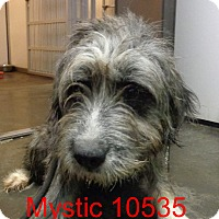 Adopt A Pet :: Mystic - baltimore, MD