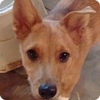 Adopt A Pet :: Trevor - Hagerstown, MD